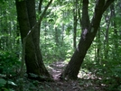 Tree-gate