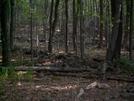 Settlement Ruins: Sterling Forest