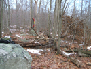 Blow down by sasquatch2014 in Trail & Blazes in New Jersey & New York