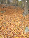 Hidden Trail & Fall Leaves by sasquatch2014 in Trail & Blazes in New Jersey & New York