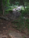 Trail to Telephone Pioneer Shelter by sasquatch2014 in Trail & Blazes in New Jersey & New York