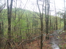 Limited Views by sasquatch2014 in Trail & Blazes in Virginia & West Virginia