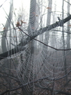 Spider Web by sasquatch2014 in Other