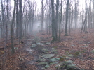 Early Blanket Of Fog by sasquatch2014 in Trail & Blazes in Virginia & West Virginia
