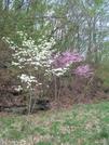 Two Flowering Trees