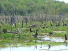 Beaver Bog by sasquatch2014 in Views in Massachusetts