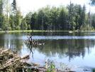 Fresh Beaver Pond by sasquatch2014 in Views in Massachusetts