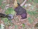 Purple Bear Poop