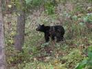 Bear by sasquatch2014 in Views in Virginia & West Virginia