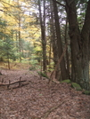 Old Road Or Trail? by sasquatch2014 in Views in New Jersey & New York