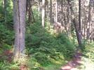 Vermont Hike Summer 09 by sasquatch2014 in Trail & Blazes in Vermont