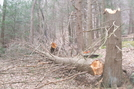 March Blow Down - Ny by sasquatch2014 in Views in New Jersey & New York