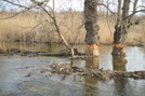 Late March In The Great Swamp Ny At