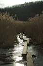 Late March In The Great Swamp Ny At by sasquatch2014 in Views in New Jersey & New York