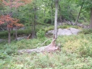 stone Wall and Fall colors by sasquatch2014 in Trail & Blazes in New Jersey & New York