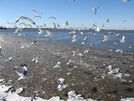 Birds, Birds, Birds by kayak karl in Birds