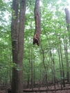 Trunkless Tree by Key West Hikers in Trail & Blazes in Maryland & Pennsylvania