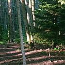 Trail near Whitetop Mtn Rd by GoldenBear in Trail & Blazes in Virginia & West Virginia