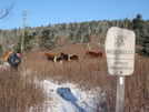 Duck and the Ponies In Lewis Fork by jimthehiker in Other