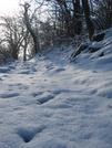 Snp Snow by DAKS in Trail & Blazes in Virginia & West Virginia