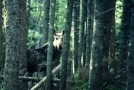 ME, Moose2 by Cosmic Crusader in Moose