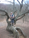 The Tree by SmokeEater in Trail & Blazes in North Carolina & Tennessee