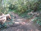 Trllium Gap Trail by HikerRanky in Other Trails