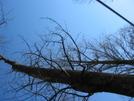 Warbonnet Blackbird Pics by HikerRanky in Hammock camping
