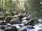 More Porter's Creek by HikerRanky in Trail & Blazes in North Carolina & Tennessee