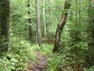 Whiteblaze Along The At... by Yukon in Trail & Blazes in Vermont