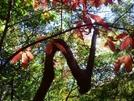 The N Branch by gaga in Trail & Blazes in Georgia