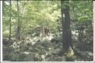 Nobo towards Kirkridge Shelter, PA by Hammock Hanger in Trail & Blazes in Maryland & Pennsylvania