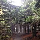Roan Highlands foggy