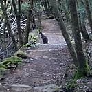 Wallaby on trail, Cataract Gourge, Tasmania