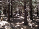 Art Loeb Trail by wilconow in Other Trails