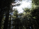 Mount Mitchell Hike by wilconow in Other Trails