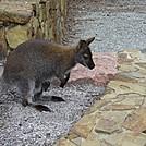 Tasmania, Australia, Wineglass Bay Trail parking lot by wilconow in Other