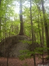 Rock mangled Tree or Tree mangled Rock? by wilconow in Trail & Blazes in Virginia & West Virginia