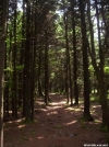 Pine Grove on Unaka Mountain by wilconow in Trail & Blazes in North Carolina & Tennessee