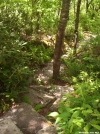 Exposed Ridge Trail, south of Flint Mountain Shelter by wilconow in Trail & Blazes in North Carolina & Tennessee