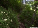 Going up Three Ridges by wilconow in Trail & Blazes in Virginia & West Virginia