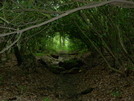 Rhododendron Tunnel by Ghosthiker in Members gallery