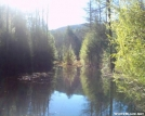 Cohutta Beaver Pond by halibut15 in Other Galleries
