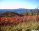 Color on Cheoah Bald by halibut15 in Views in North Carolina & Tennessee