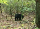 Snp Bear