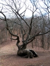 Tree At Nc Border by nightshaded in Trail & Blazes in North Carolina & Tennessee