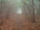 Foggy Morning On The Trail by nightshaded in Views in North Carolina & Tennessee