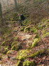 Moss-covered Trail by nightshaded in Views in North Carolina & Tennessee