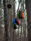 Bear Bags At Rock Gap Shelter by nightshaded in Trail & Blazes in North Carolina & Tennessee