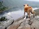 Weverton Cliffs overlook, MD by tazie in Trail & Blazes in Maryland & Pennsylvania